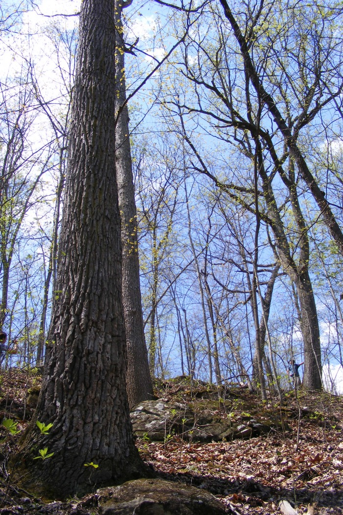 Robinson Forest Images - Coles Fork