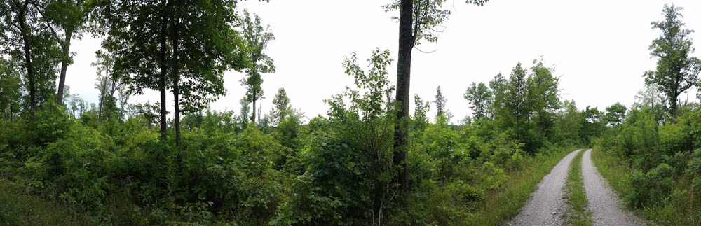 Example of an area with major pine beetle damage and resulting open canopy on Curt Pond Ridge